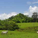 Cows and Hills of Cobano